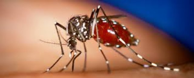 Grande epidemia do virus chikungunya deixa 33 mortos na Guiana Francesa e ameaça Brasil