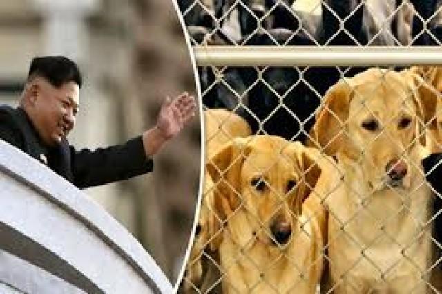 Presidente Kim Jong-un, ordena que norte-coreanos entreguem cães de estimação para que possam ser comidos
